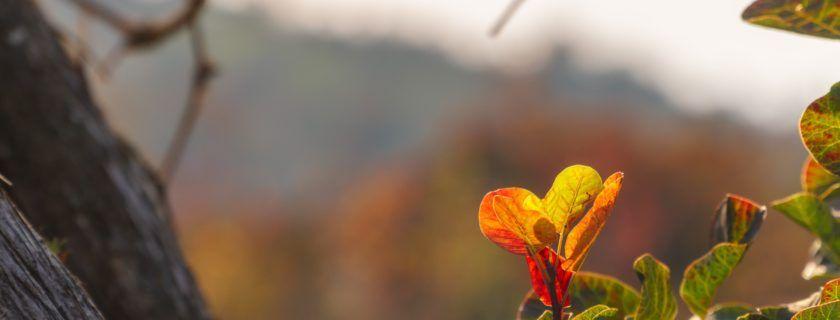 Naravoslovni dan za 6. r. – Arboretum Volčji potok
